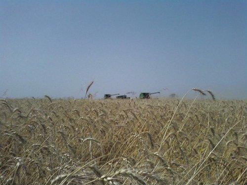 combines in the distance